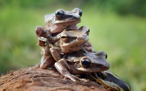 Dordogne couple Michel and Annie Pecheras have four months to drain their pond and remove noisy frogs, court rules - Credit: Frenki Jung/Solent News & Photo Agency /Solent News & Photo Agency