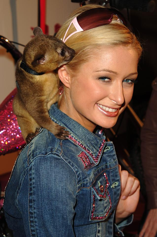 "Paris Hilton was <a target=""_blank"" href=""http://www.foxnews.com/story/0,2933,208060,00.html"">forced to get a tetanus shot</a> in 2006 when her pet Kinkajou Baby Luv (what a misnomer!) bit her while they played together."