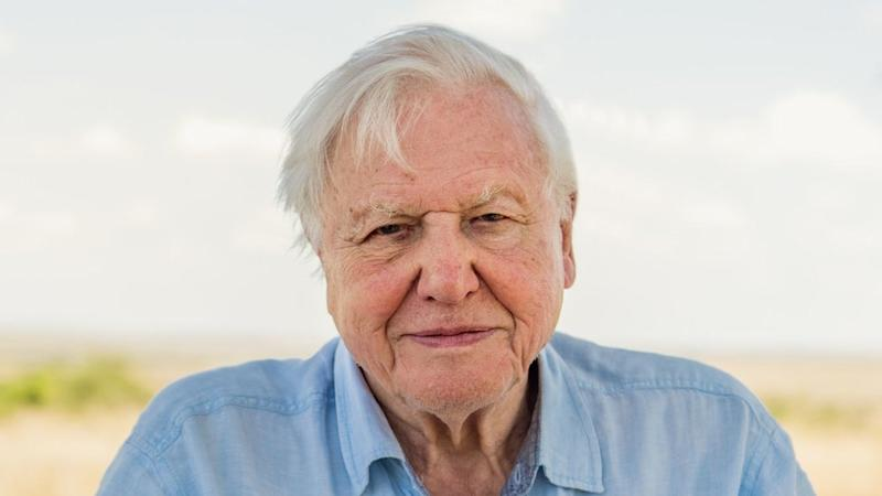 Sir David Attenborough spent lockdown 'listening to birds'