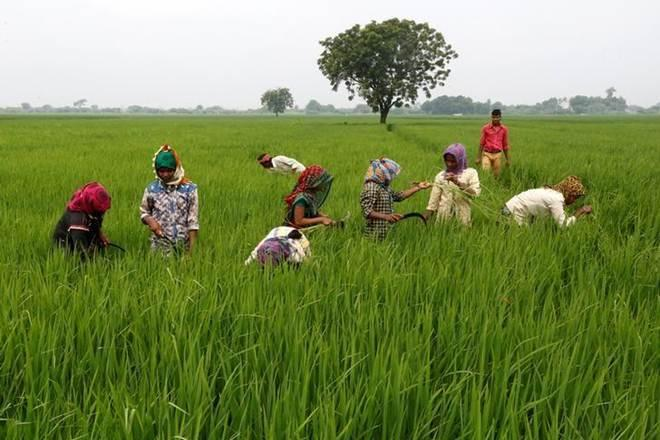 Budget 2019, agriculture budget, india, union budget 2019, Nirmala Sitharaman, agriculture budget india, budget 2019 india