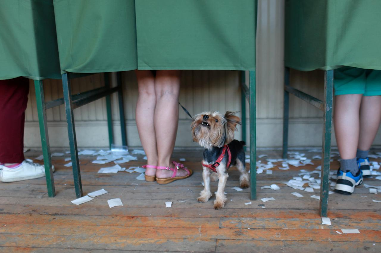 A citizen votes next to a dog at a polling station in Santiago, Chile November 19, 2017. REUTERS/Pablo Sanhueza