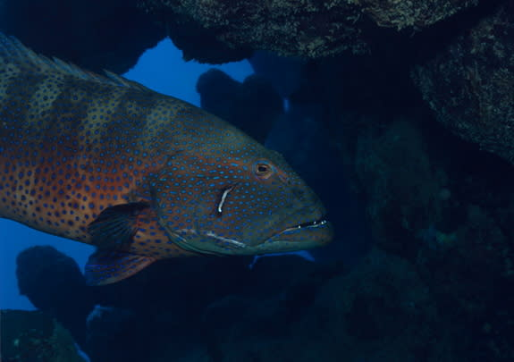 Fish Use 'Sign Language' to Help Out Hunting Buddies
