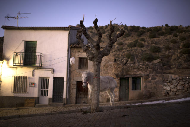 <p>A horse stands by a tree before the ritual in honor of Saint Anthony the Abbot in San Bartolome de Pinares, Spain, Tuesday, Jan. 16, 2018. (Photo: Francisco Seco/AP) </p>