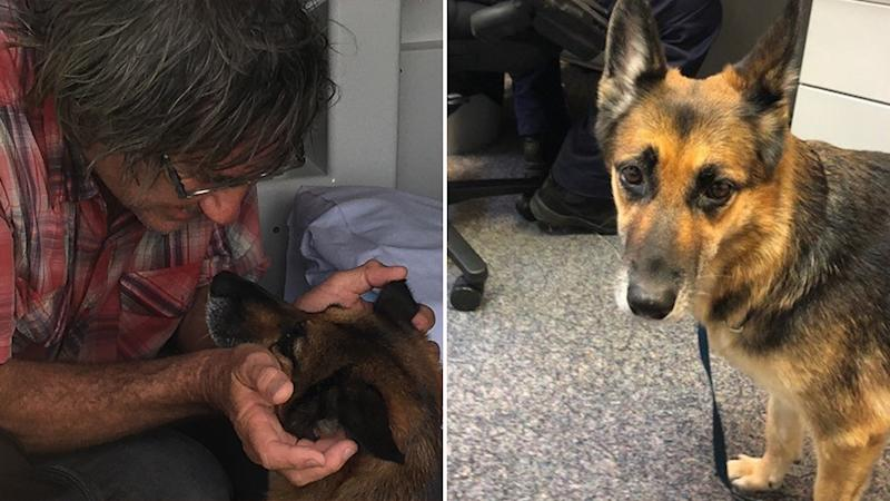 Heidi and her owner were both saved, neither were severely injured. Source: Queensland Police