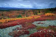 """<p><strong>Where to go:</strong> Make the trek to <a href=""""https://www.nps.gov/dena/planyourvisit/shoulder-season.htm"""" rel=""""nofollow noopener"""" target=""""_blank"""" data-ylk=""""slk:Denali National Park"""" class=""""link rapid-noclick-resp"""">Denali National Park</a> during the shoulder season to see the reds, yellows, and greens of the tundra in all their glory. </p><p><strong>When to go: </strong>September</p><p><a class=""""link rapid-noclick-resp"""" href=""""https://go.redirectingat.com?id=74968X1596630&url=https%3A%2F%2Fwww.tripadvisor.com%2FHotels-g143022-Denali_National_Park_and_Preserve_Alaska-Hotels.html&sref=https%3A%2F%2Fwww.redbookmag.com%2Flife%2Fg34045856%2Ffall-colors%2F"""" rel=""""nofollow noopener"""" target=""""_blank"""" data-ylk=""""slk:FIND A HOTEL"""">FIND A HOTEL</a></p>"""