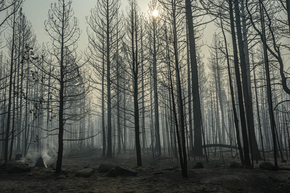 FILE - In this July 22, 2021, spot fires smolder near trees damaged by the Bootleg Fire in Paisley, Ore. Each year thousands of acres of dense timber are thinned near remote communities, all designed to slow the spread of massive wildfires. While most scientific studies find such forest management is a valuable tool, environmental advocates say data from recent gigantic wildfires support their long-running assertion that efforts to slow wildfires have instead accelerated their spread. (AP Photo/Nathan Howard, File )