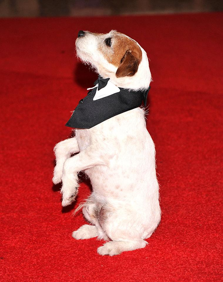 "Move over, Bo Obama! The four-legged star of ""The Artist,"" Uggie, stole the show on the red carpet in an adorable mini tuxedo. Once inside the event, he took a seat at the <i>Washington Times</i>' table."