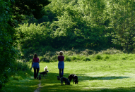 <p>Dog walkers in Guildford, Surrey, take advantage of the warm weather (Picture: REX) </p>