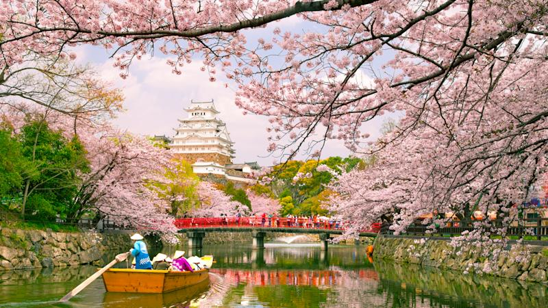 Himeji, Japan - April 3, 2016: Himeji Castle with beautiful cherry blossom in spring season.