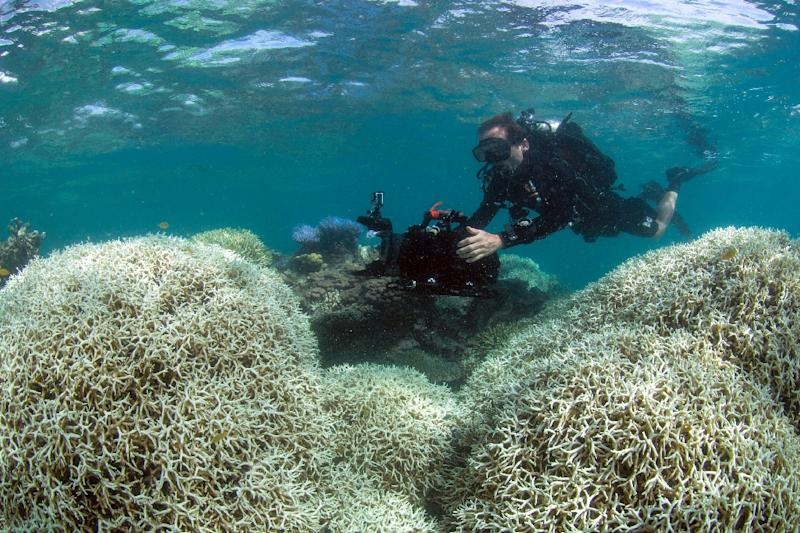 A diver is seen filming a reef affected by bleaching off Lizard Island in the Great Barrier Reef (AFP Photo/Handout)
