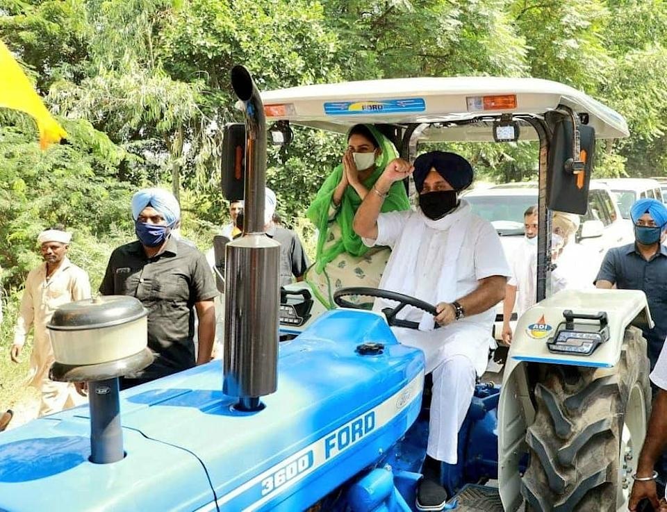 Sukhbir Badal and Harsimrat Kaur protested in a tractor during the 25 September Bharat Bandh