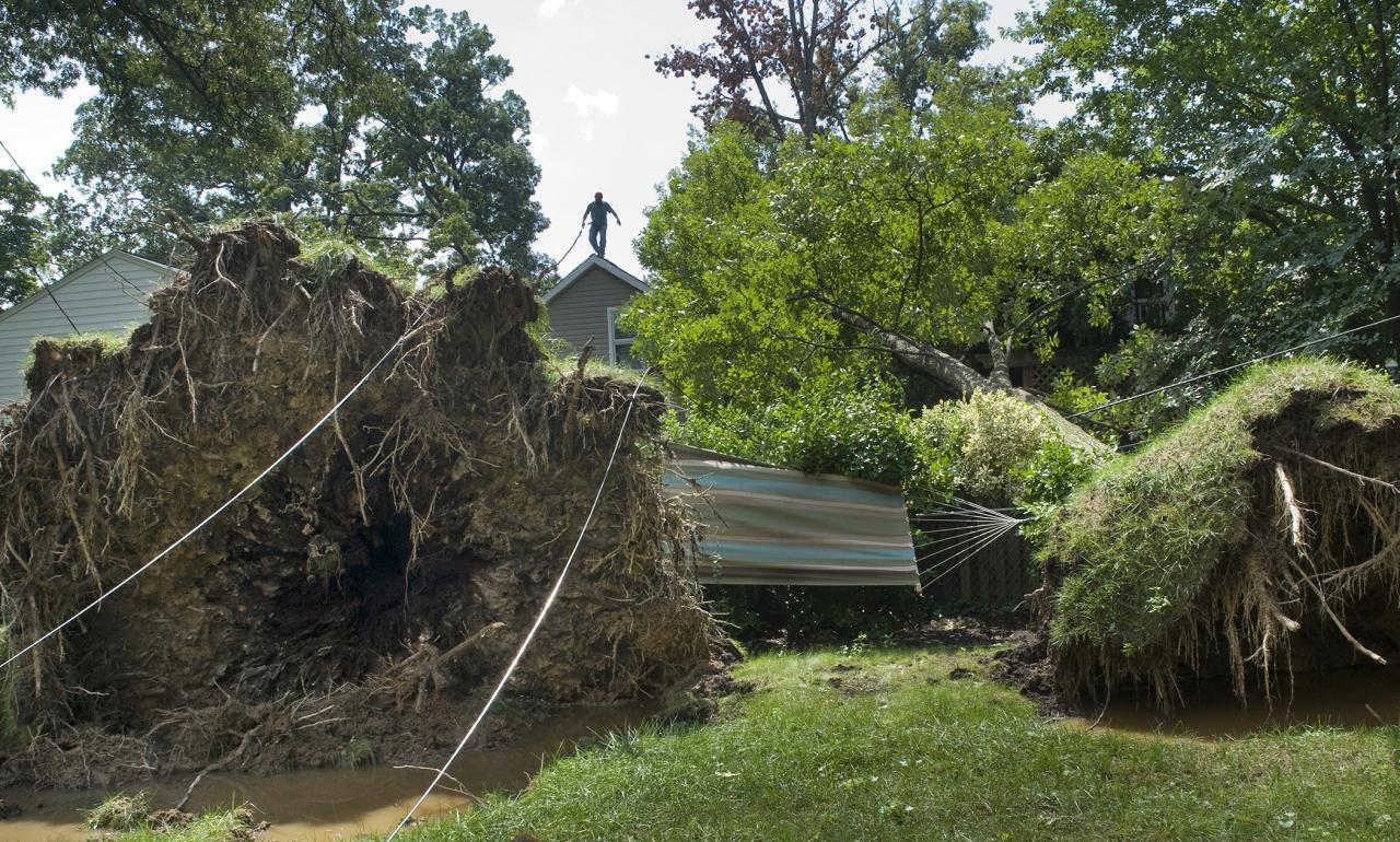 A tree was downed in Alexandria, Va. as a result of Hurricane Irene. The Category 3 storm killed at least 56 people in 2011.