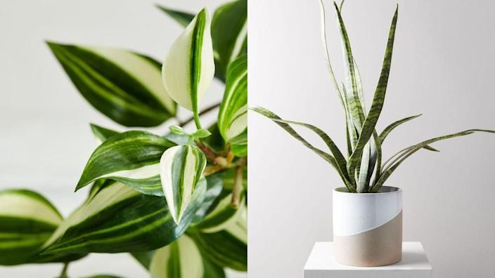 18 fake plants that look just like the real thing