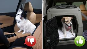 All animals should be safely secured in a vehicle while driving. Utilizing a secured pet carrier or kennel is a way to travel safely with pets.