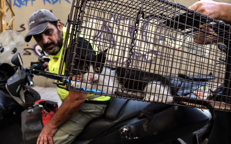 A man examines one of the many rescued kittens in Beirut - Elizabeth Fitt /© EF Images 2020