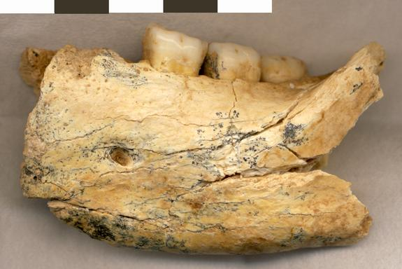 Half-Million-Year-Old Human Jawbone Found