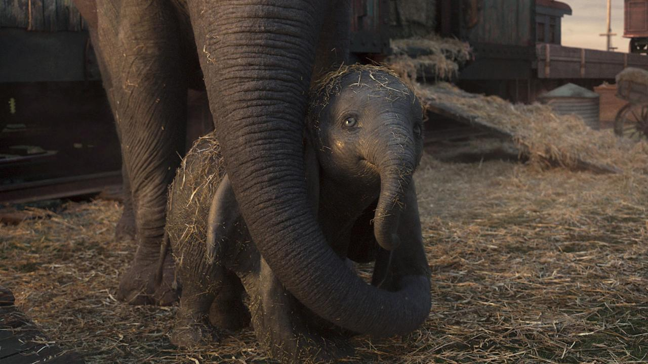 <p>Mrs. Jumbo protects her son. All the animals in the film are CGI, but they don't talk like the original, and Mrs. Jumbo's fellow female elephants aren't in the film. (Disney) </p>