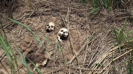 Human skulls suspected to belong to victims of a recent combat between government army and Kamuina Nsapu militia are seen on the roadside in Tshienke near Kananga, the capital of Kasai-central province of the DRC