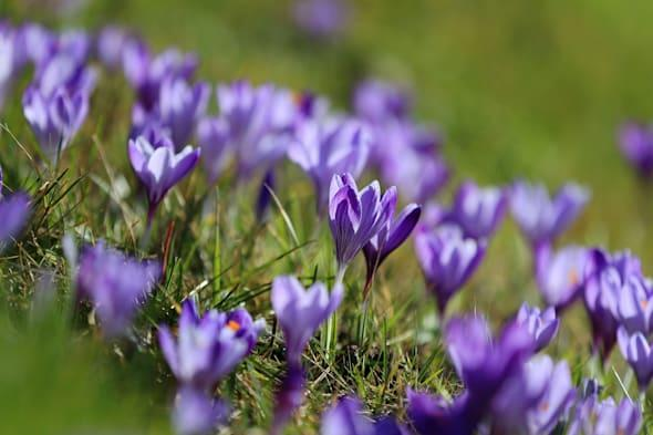 Spring weather March 6th 2015