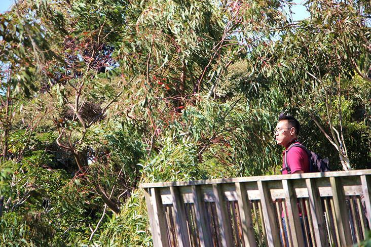 The wind blowing through the native trees will make any visitor to Wellington feel relaxed