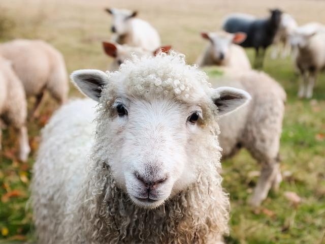 <p>Talking to your plants and animals is always considered to be good for you and for your animals. Farmers in Romania and Belgium do just that as they wish their farm animals on New Year's Day. Romanian farmers even try to listen to their animals and understand them on New Year's eve. </p>