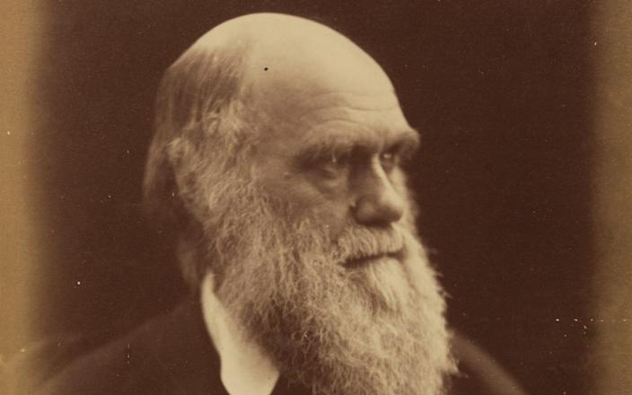 """ILE - In this undated file photo, British scientist Charles Robert Darwin, founder of the theory for the evolution of life is seen at an unknown location. An auction house said Sunday, Nov. 22, 2009 it is selling a rare first edition of Charles Darwin's """"On the Origin of Species"""" found in a family's guest lavatory in southern England. (AP Photo, File) - AP Photo"""