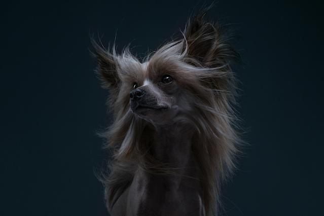 "<p>Through their works, the two look to capture ""emotional and quirky"" portraits of each breed. (Photo: Alexander Khokhlov-Veronica Ershova/Caters News) </p>"