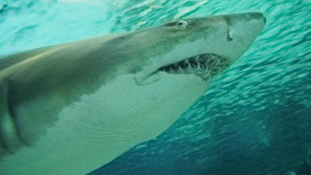 Mother Saves Daughter From Shark Attack in Florida