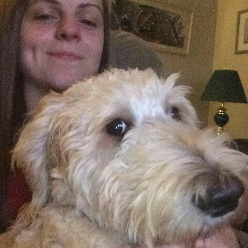 Cooper the labradoodle has been reunited with owner Terri Pittman - Credit: CBC