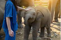 <p>Spring often provides the perfect weather for visiting a zoo. Plus, it's a surprisingly good way to get some exercise, too. If your family isn't into sports or hiking, strolling around the zoo can be an educational way to get some movement into the day.</p>