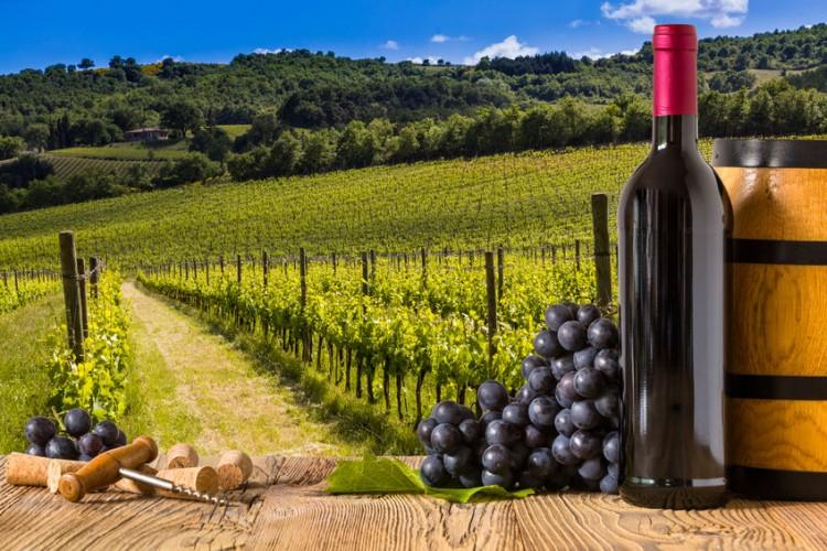 agriculture, autumn, barrel, bottle, branch, bright, closeup, country, countryside, farm, fruit, garden, glare, glass, goblet, grape, green, growth, harvest, italy, landscape, leaf, nature, outdoors, outside, plant, plantation, ripe, summer, sun, sunlight, sunny, sunshine, terrace, tuscany, valley, vine, vineyard, wine, winery
