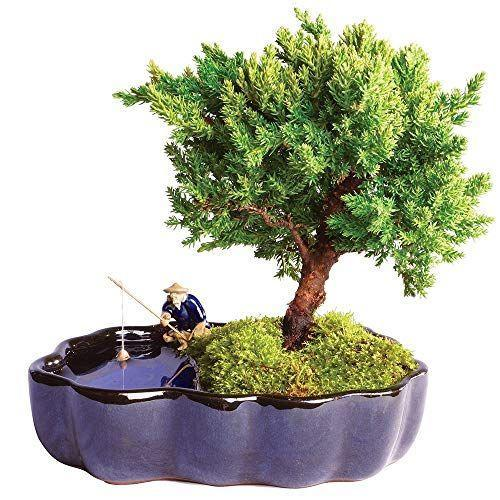 "<p><strong>Brussel's Bonsai</strong></p><p>amazon.com</p><p><strong>$29.99</strong></p><p><a href=""https://www.amazon.com/dp/B07NY3SXF7?tag=syn-yahoo-20&ascsubtag=%5Bartid%7C10070.g.19843084%5Bsrc%7Cyahoo-us"" rel=""nofollow noopener"" target=""_blank"" data-ylk=""slk:Shop Now"" class=""link rapid-noclick-resp"">Shop Now</a></p><p>Gift your mother-in-law a bouquet of <a href=""https://www.womansday.com/home/how-to/a4695/how-to-make-fresh-flowers-last-longer-103671/"" rel=""nofollow noopener"" target=""_blank"" data-ylk=""slk:fresh flowers"" class=""link rapid-noclick-resp"">fresh flowers</a>, and she'll enjoy it for a week. Gift her a Bonsai tree, and she'll enjoy it for many years to come. </p>"