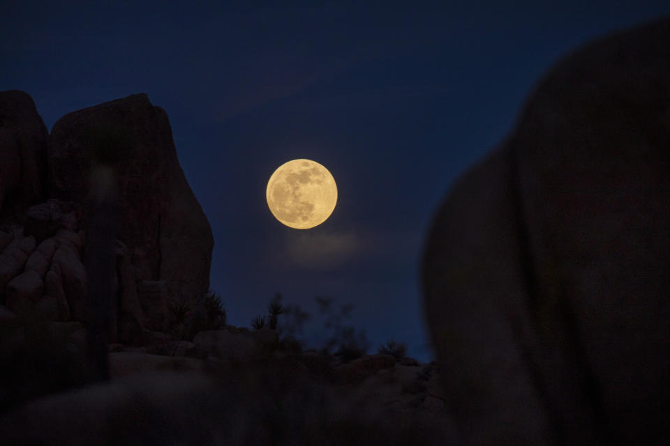 <p>Joshua Tree National Park, CA - May 25: Clouds surround the super flower moon rising above rocks and Joshua Trees , on its way to the full eclipse and blood moon phase Tuesday, May 25, 2021 in Joshua Tree National Park, CA. This occurs when the moon enters Earths shadow and turns a blood red color during a total lunar eclipse, the first in more than two years visible from the United States. (Allen J. Schaben / Los Angeles Times via Getty Images)</p>