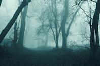 <p>Set this forest as your backdrop . . . if you dare. </p>