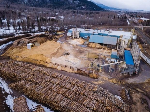 An aerial shot of logs amassed at a wood pellet mill in Smithers, B.C., by an environmental organization has critics concerned about companies using whole trees rather than wood waste to produce the pellets which are sold as biofuel. (Stand.earth - image credit)