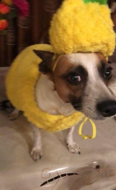 Goldie is not happy, says USA TODAY Entertainment Reporter Rasha Ali. Back home with her parents in Los Angeles, he suffered the indignity of wearing yellow. I think he looks sharp.