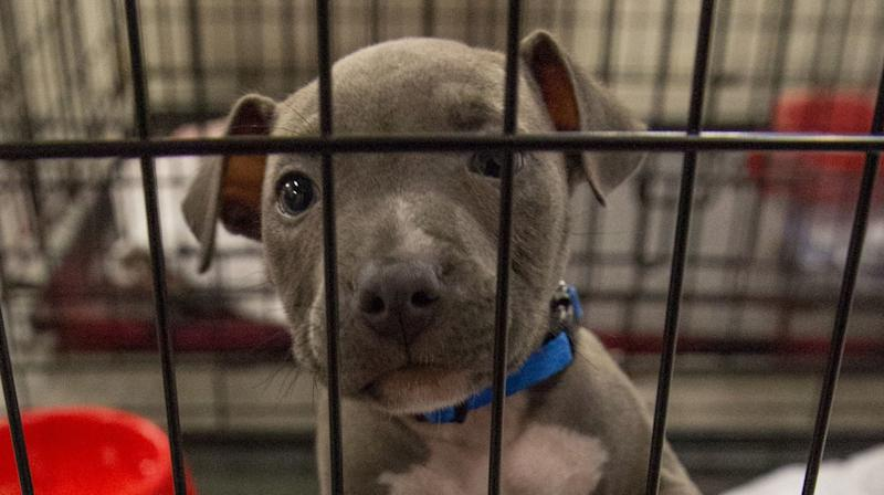 Help Animals Hit By Harvey By Adopting A Pet In Your Own City