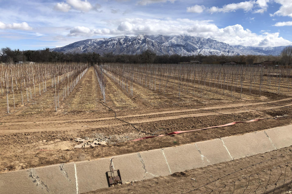 FILE - In this Feb. 17, 2021, file photo, an empty irrigation canal lines a tree farm in Corrales, N.M., as snow covers the Sandia Mountains in the background. Rainstorms grew more erratic and droughts much longer across most of the U.S. West over the past half-century as climate change warmed the planet, according to a sweeping government study released, Tuesday, April 6, 2021, that concludes the situation in the region is worsening. (AP Photo/Susan Montoya Bryan, File)