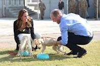 <p>Kate looked fondly at William as the couple got to play with sweet puppies during their royal visit to Pakistan in 2019. Sadly the couple's first dog, Lupo, passed away in November 2020 but they got a new royal puppy in January 2021. </p>
