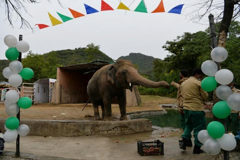 The plight of Kaavan has drawn international condemnation and highlighted the woeful state of Islamabad's zoo