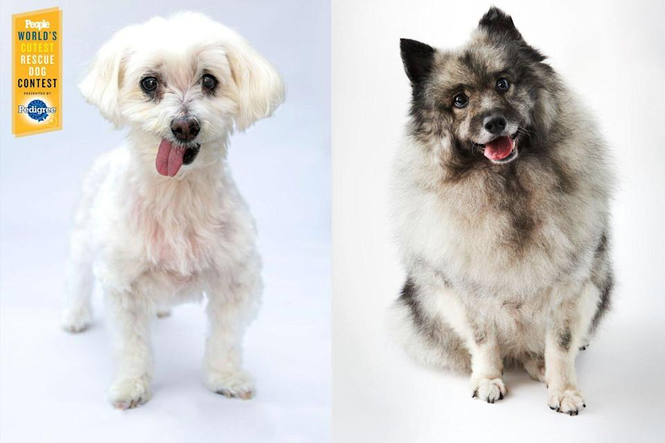 past cutest rescue dogs winners