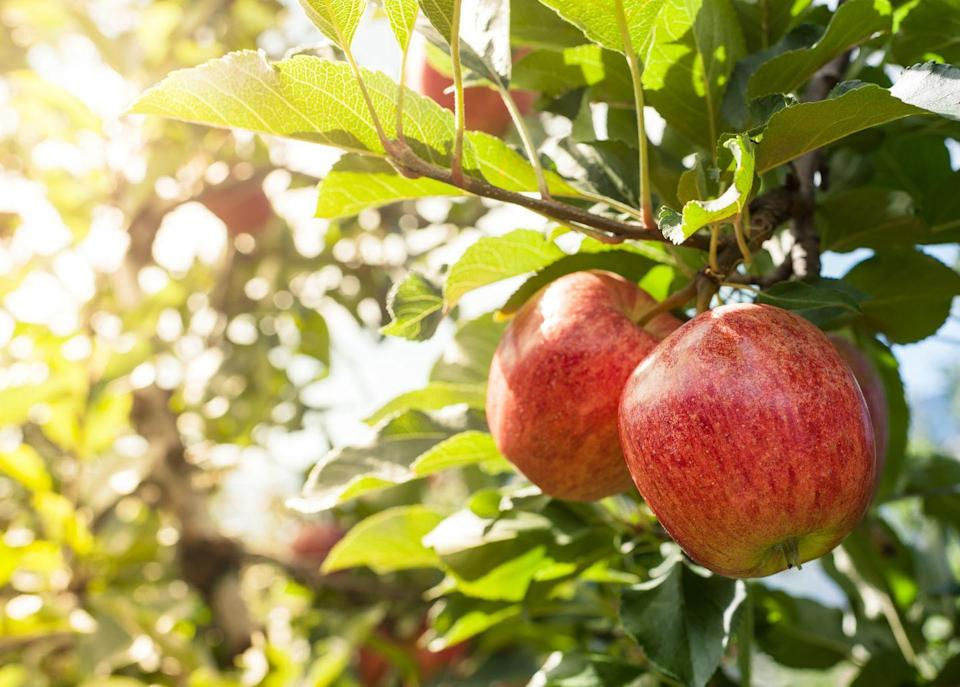 """<p>What's a more iconic fall date than apple picking together in the countryside? """"Doing simple, traditional activities speak to your core values, and can enliven conversations about stories from your childhood,"""" says House. """"They can spark those profoundly uncomplicated feelings: you feel good, happy, calm, safe.""""</p>"""