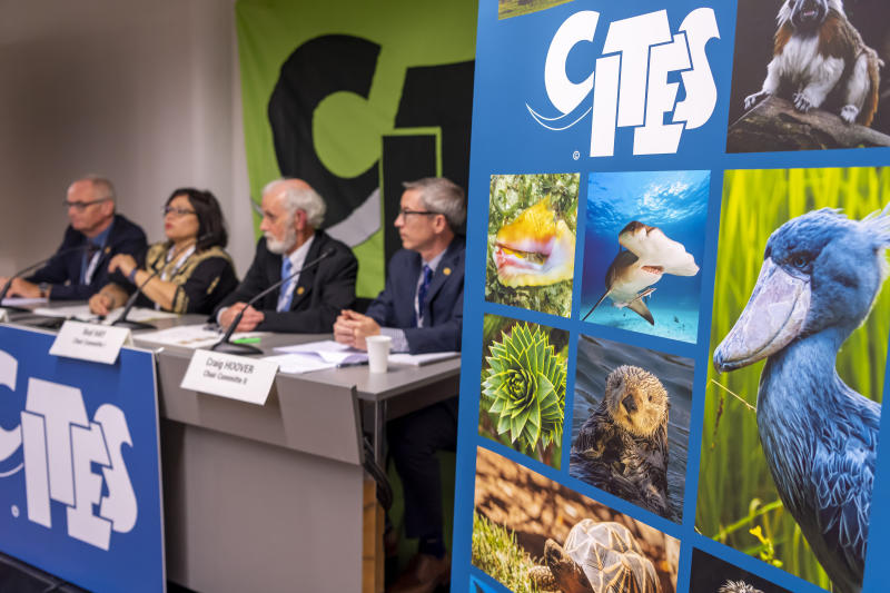 Thomas Jemmi, CITES Cop18 Chair, Ivonne Higuero, CITES Secretary-General ( Convention on International Trade in Endangered Species of Wild Fauna and Flora), Rod Hay, Chair Committe I, Craig Hoover, Chair Committe II, from left, speak, during a presse conference for the closing session of the World Wildlife Conference - CITES CoP18, in Geneva, Switzerland, Wednesday, August 28, 2019.  (Martial Trezzini/Keystone via AP)