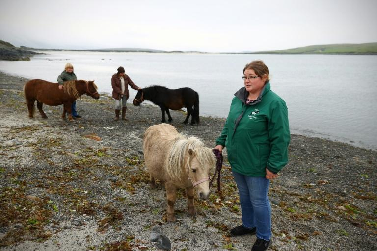 'A pony is a very nice way to spend your time,' says Sheena Anderson, chair of the Pony Breeders of Shetland Association (AFP/ADRIAN DENNIS)