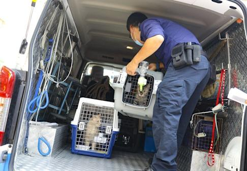 Hong Kong authorities load up a van with cats seized from Pet Oasis in Tuen Mun. Photo: Dickson Lee