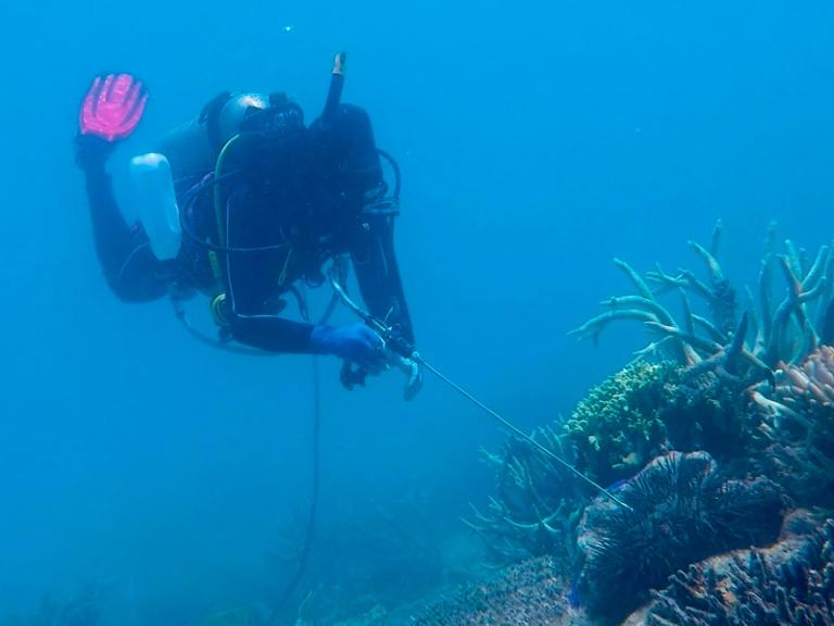 A diver injects a crown-of-thorns starfish with vinegar on the Great Barrier Reef in the hopes of culling the predatory pest, which consumes coral faster than it can be regenerated
