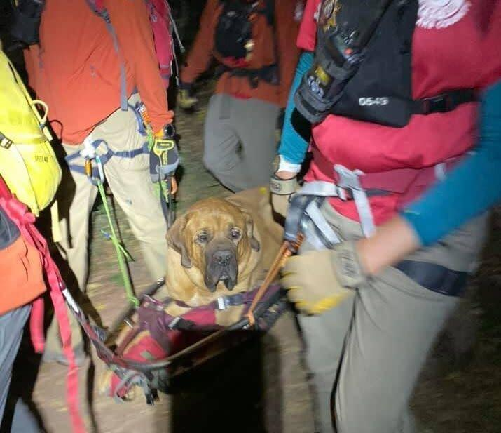 Floyd took to being rescued quite well. (Photo: Shawn Kenney/Salt Lake County Sheriff's Search and Rescue)