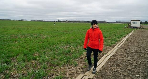 Claudia Wagner-Riddle walks between two fields at the University of Guelph. The one that uses regenerative techniques is green with the remains of a radish crop that continues to feed microbes in the soil, while the one that does not is bare.