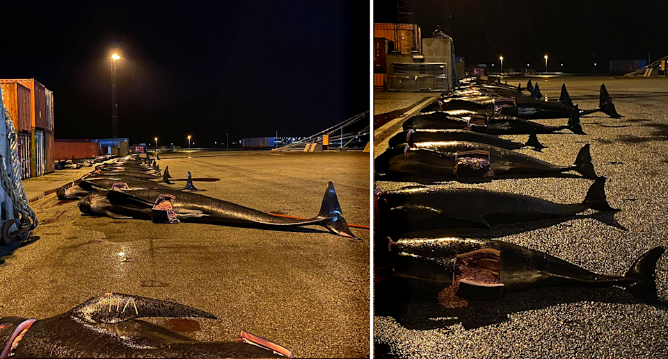Whales could be seen lined up ready to be butchered for their meat. Source: Sea Shepherd