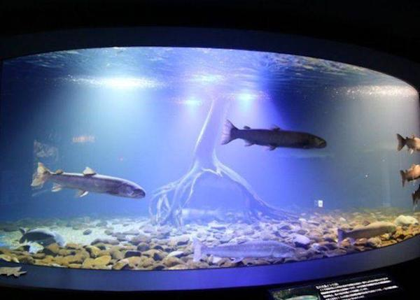 This huge aquarium is about 7m wide and offers a spectacular view of these giant freshwater fish elegantly swimming by.